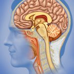 Important Herbal Remedies For The Brain